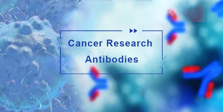 Cancer Research Antibodies