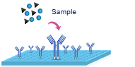 elisa assay procedure 1