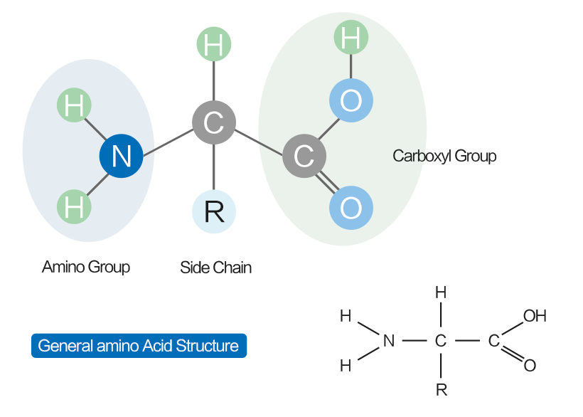 The Mystery of Amino Acids
