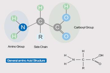 The Mystery of Amino Acids