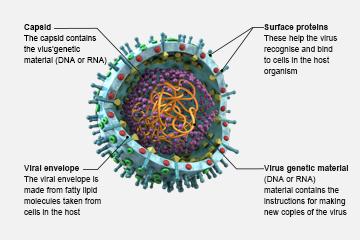 Viruses - the Top Killers